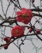image/ssasachan-2006-02-21T20:15:08-1.jpg