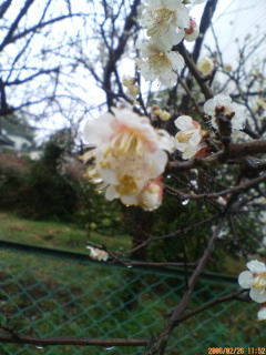 image/ssasachan-2006-02-27T18:16:40-1.jpg