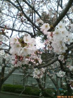 image/ssasachan-2006-03-26T23:13:45-1.jpg