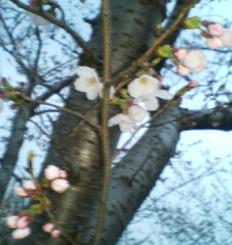 image/ssasachan-2006-03-28T19:11:31-1.jpg